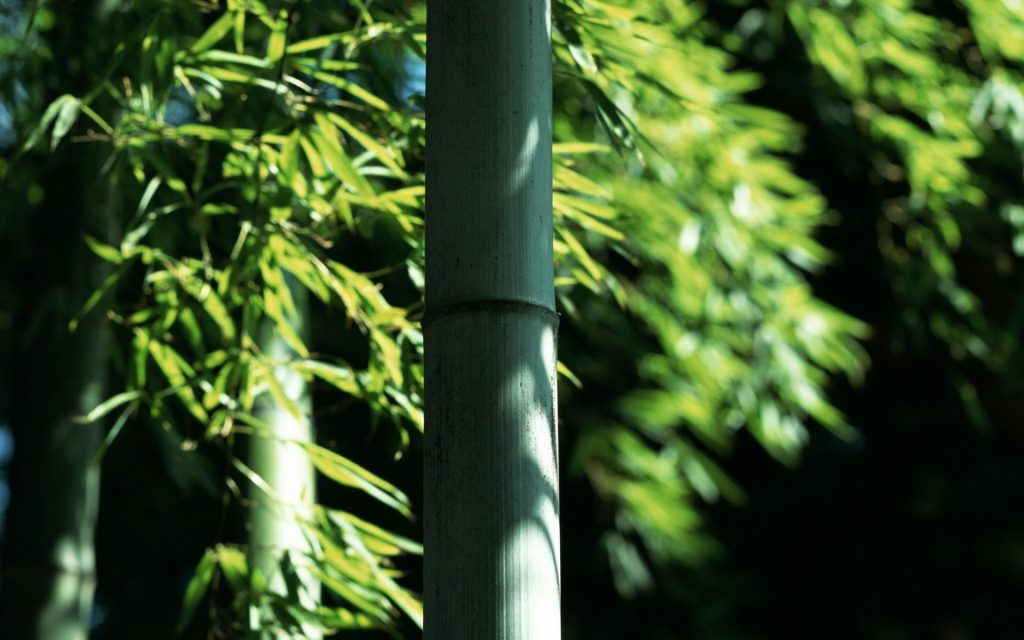 Bamboo Leaves And Shades
