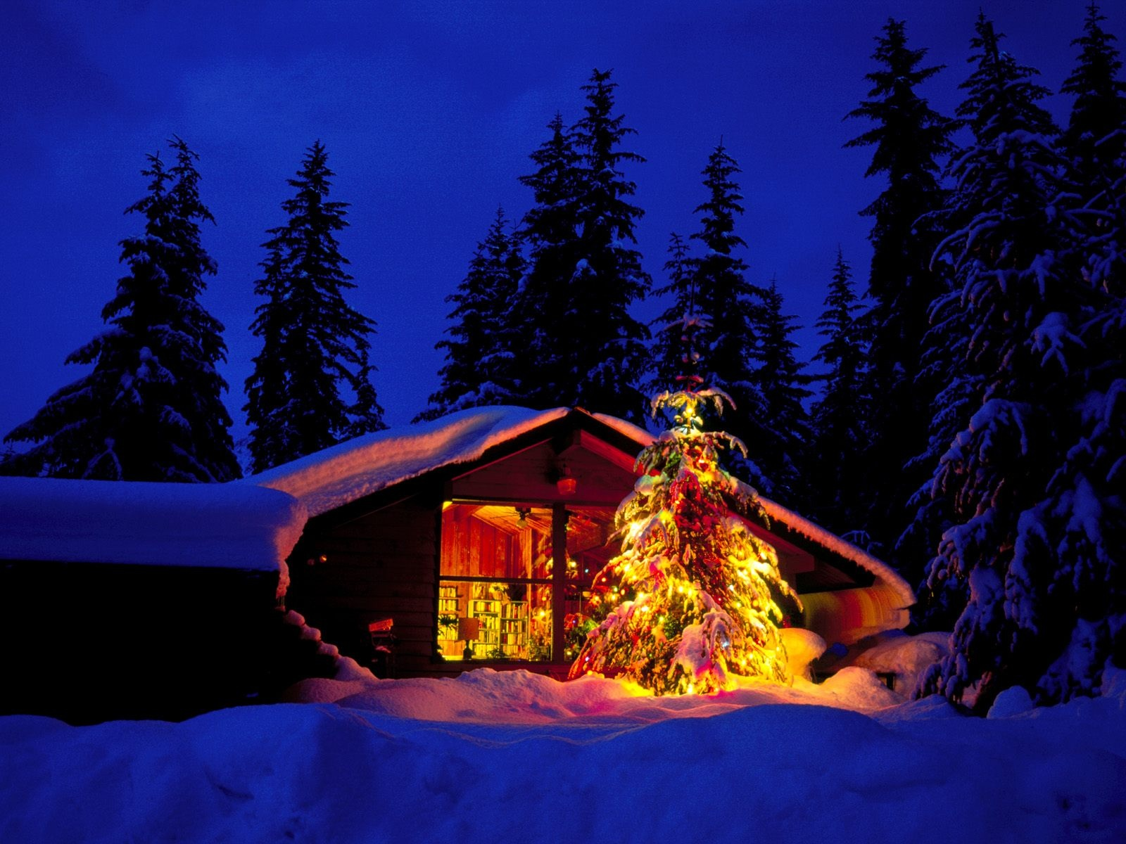 Cottage With Lights