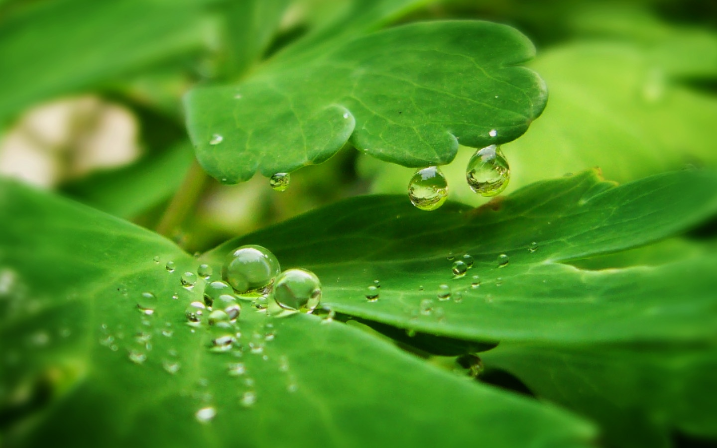 Drops On Green