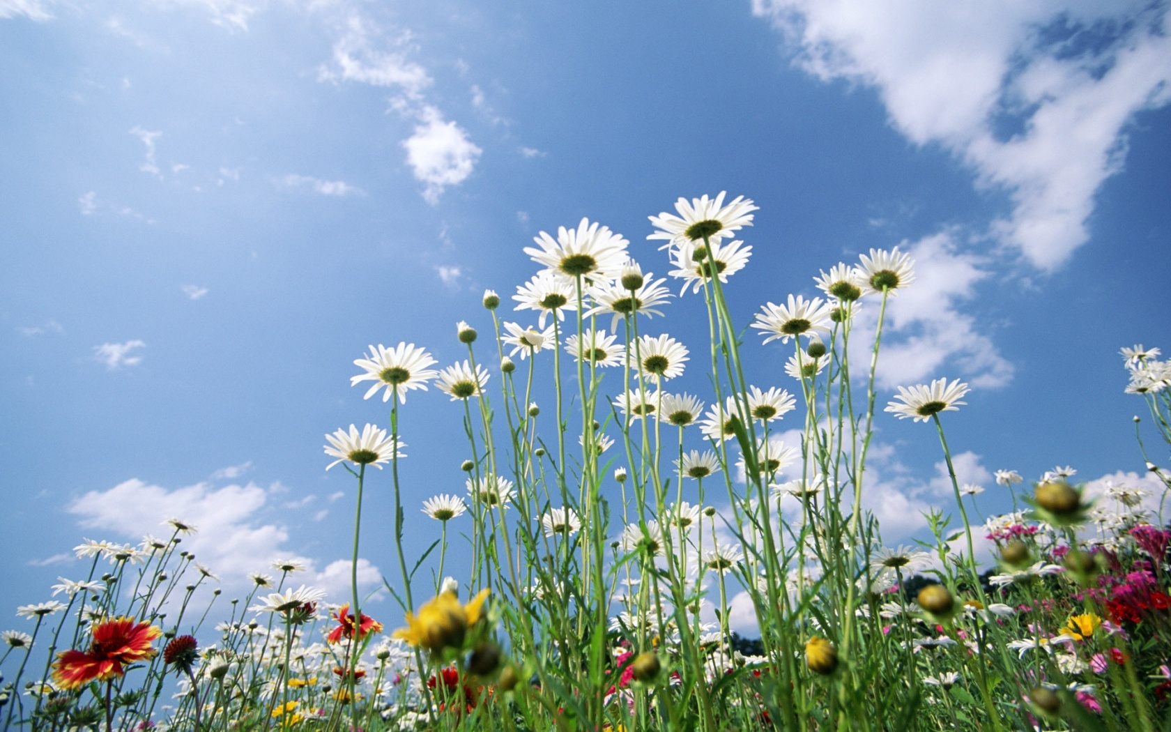 Flowers And Sky