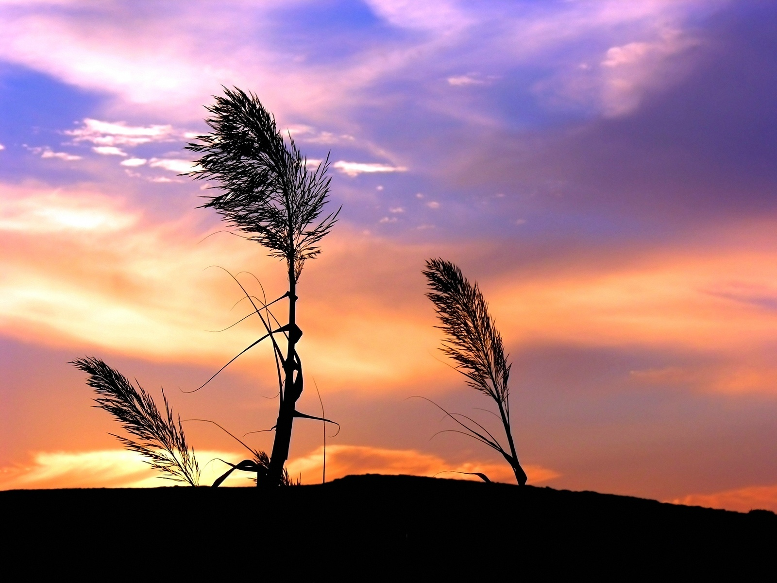 Two Plants In The Wind
