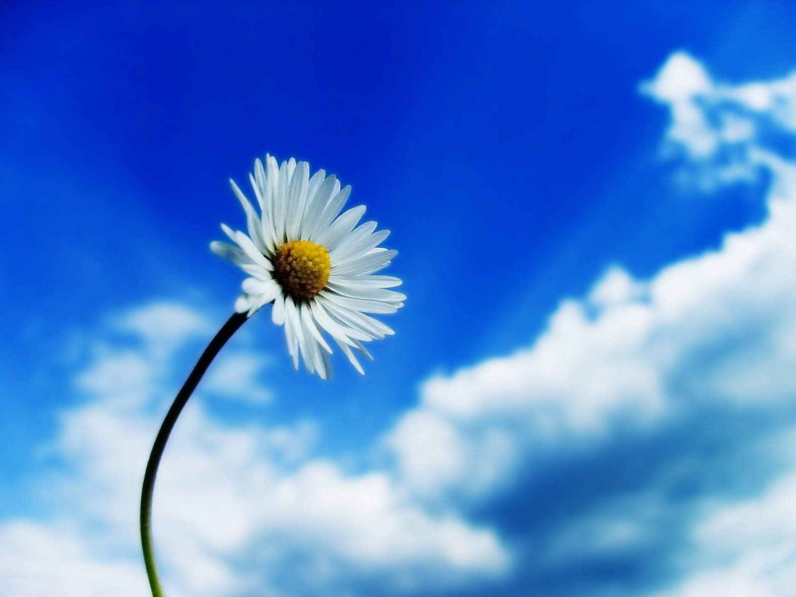 White Flower And Blue Sky